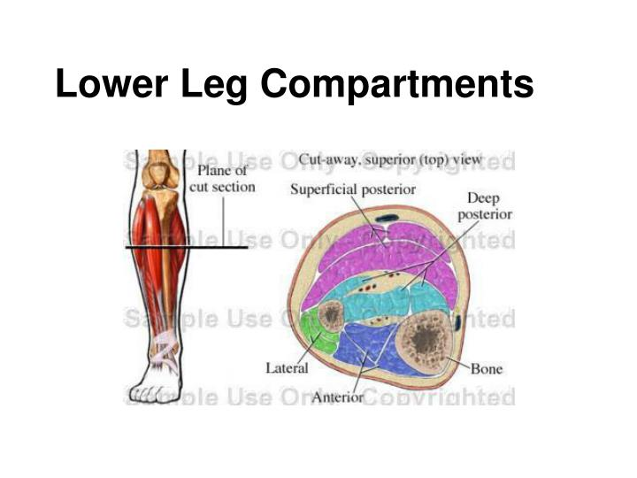 Lower leg compartments