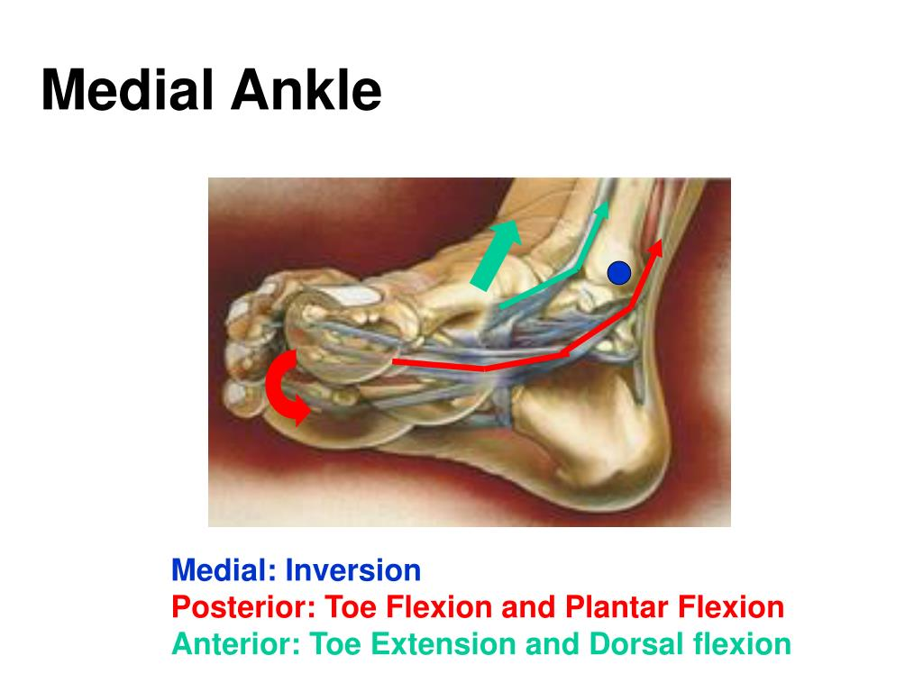 Medial Ankle