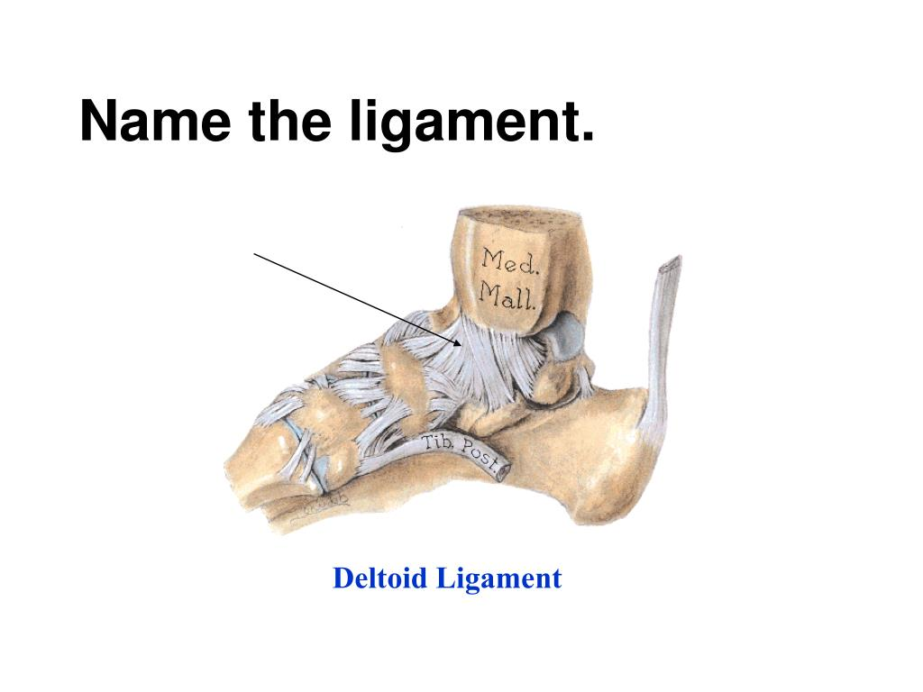 Name the ligament.