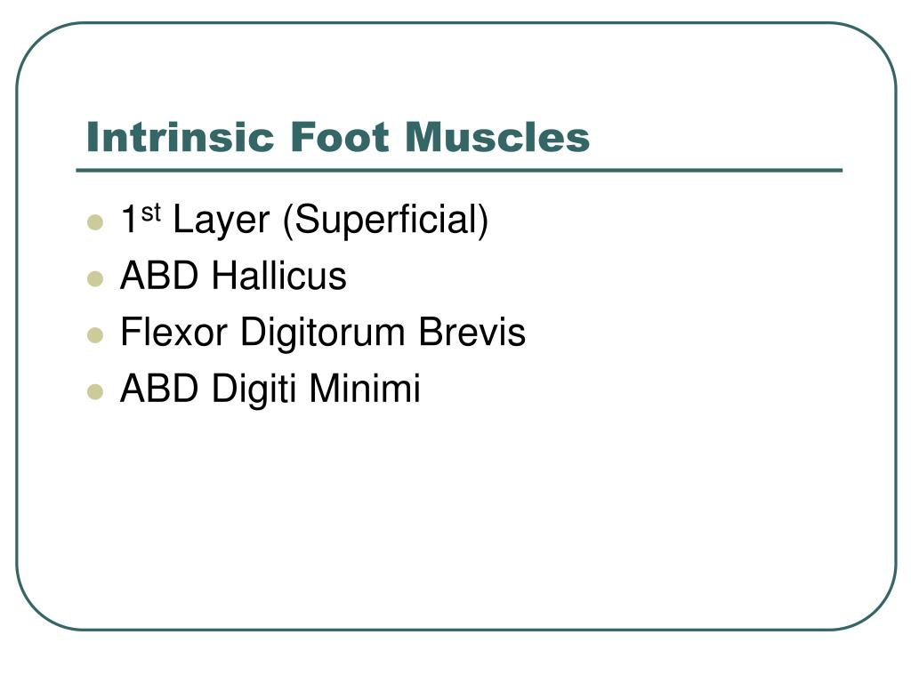 Intrinsic Foot Muscles