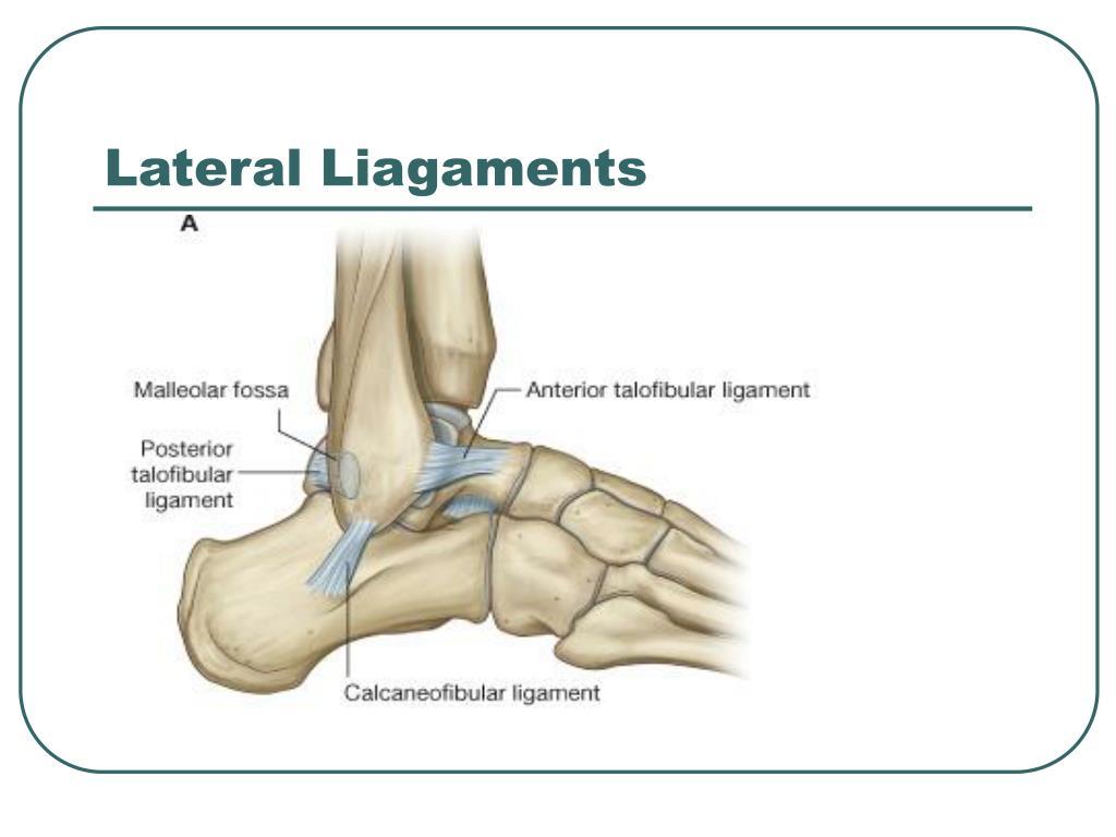 Lateral Liagaments