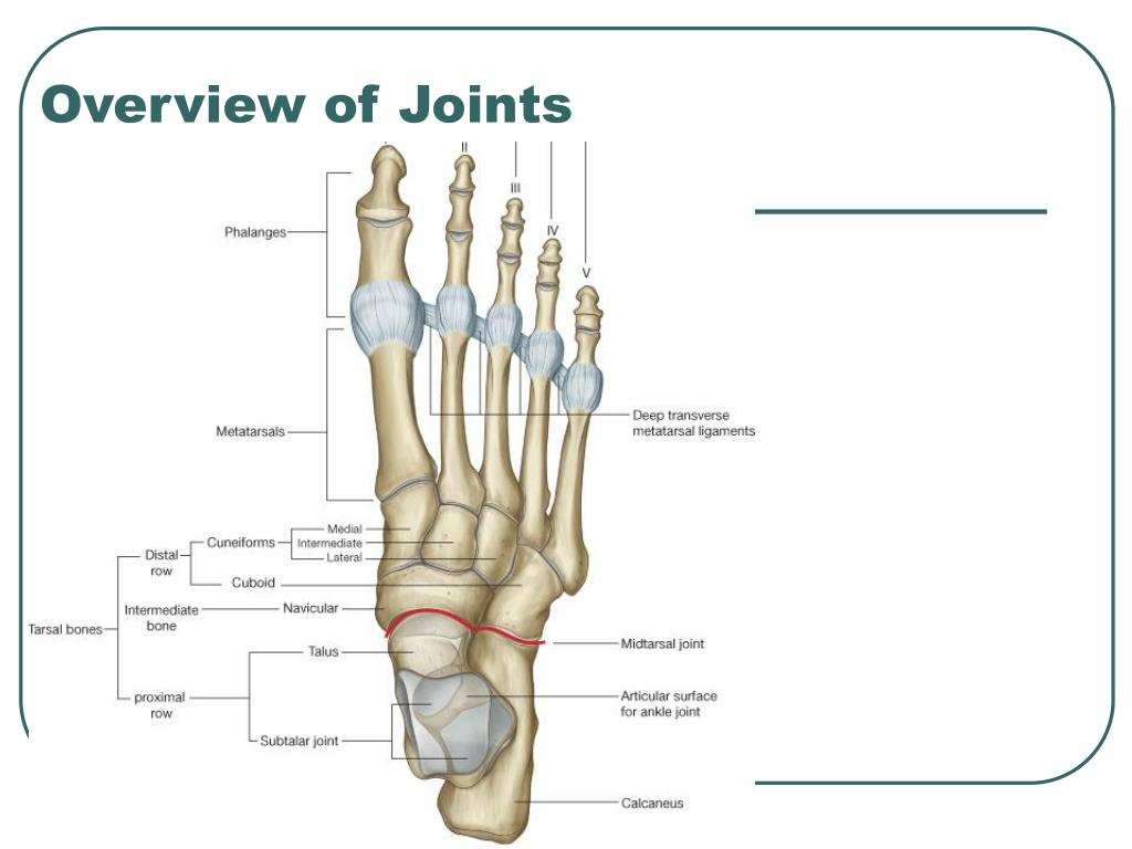 Overview of Joints