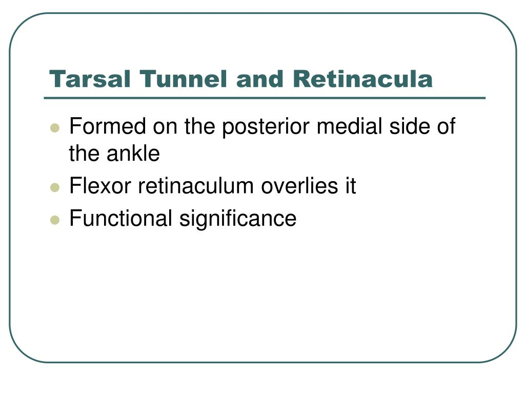 Tarsal Tunnel and Retinacula
