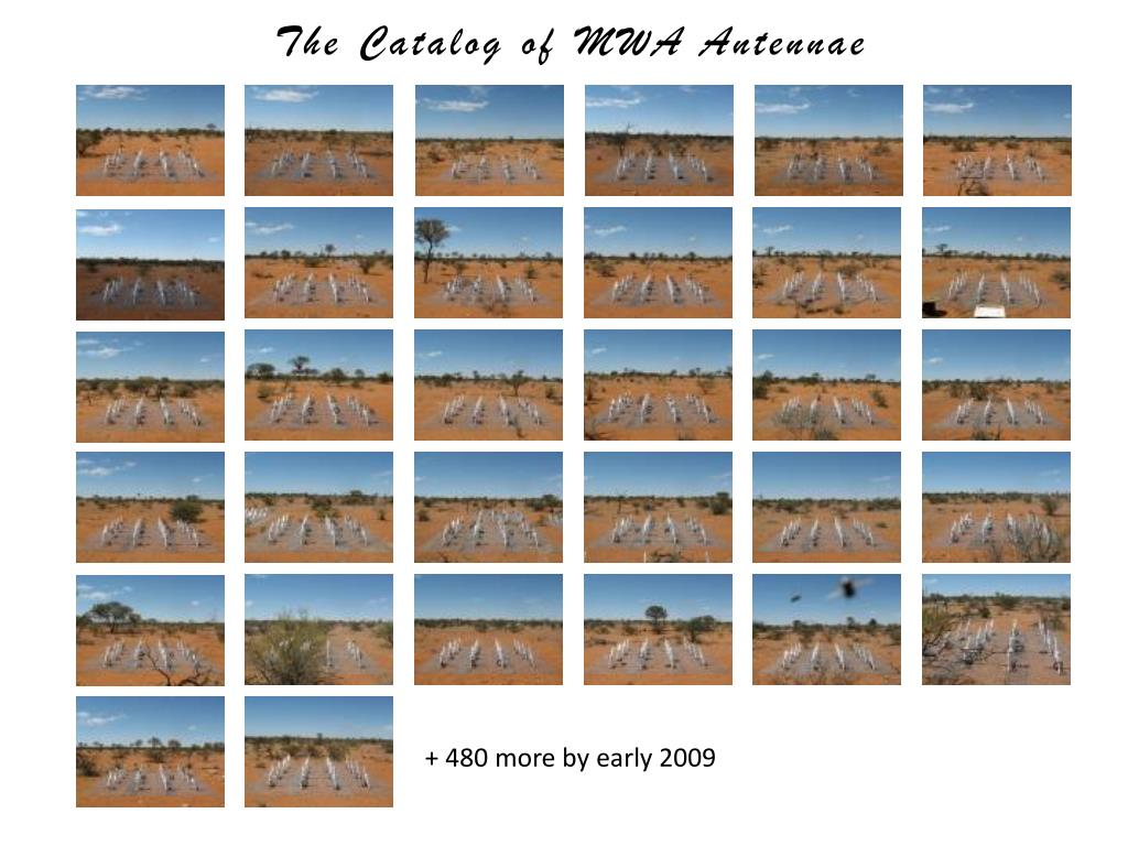 The Catalog of MWA Antennae