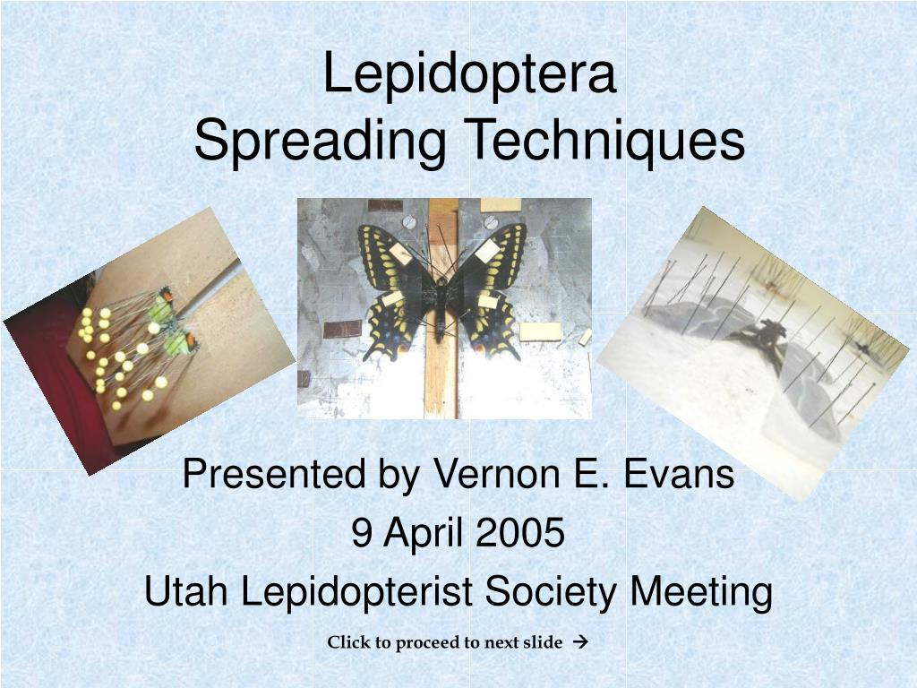 lepidoptera spreading techniques l.