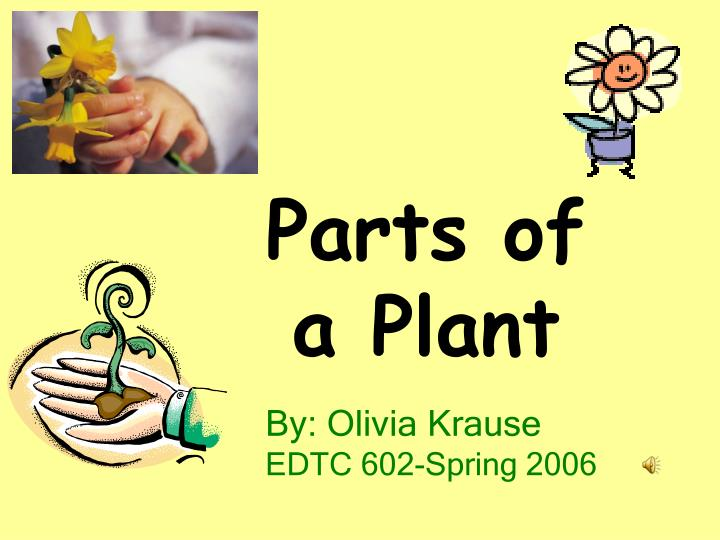 parts of a plant n.