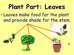 plant part leaves