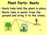 plant parts roots