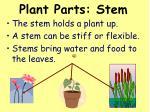 plant parts stem