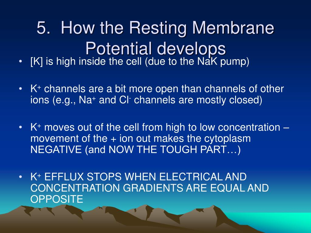 5.  How the Resting Membrane Potential develops