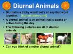 diurnal animals