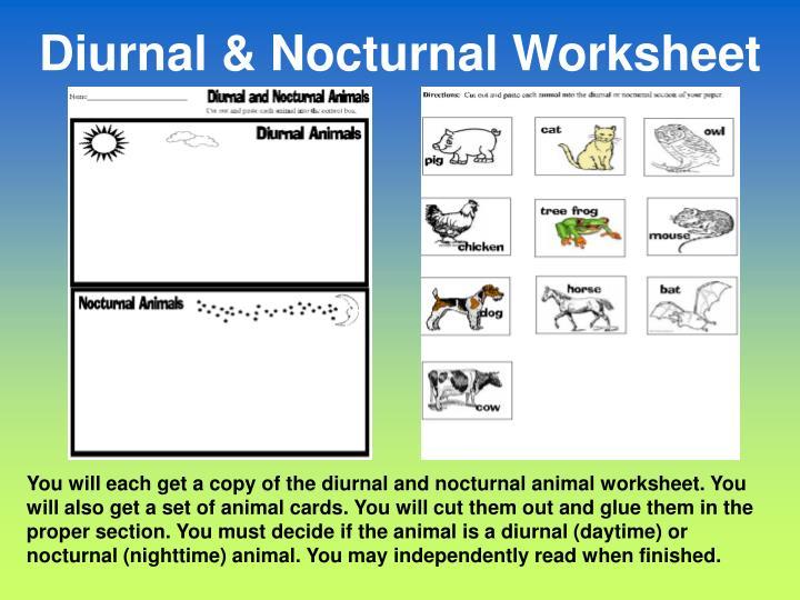 Diurnal & Nocturnal Worksheet