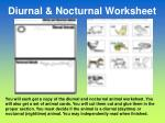 diurnal nocturnal worksheet