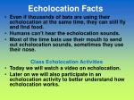 echolocation facts