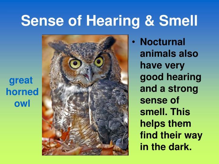 Sense of Hearing & Smell