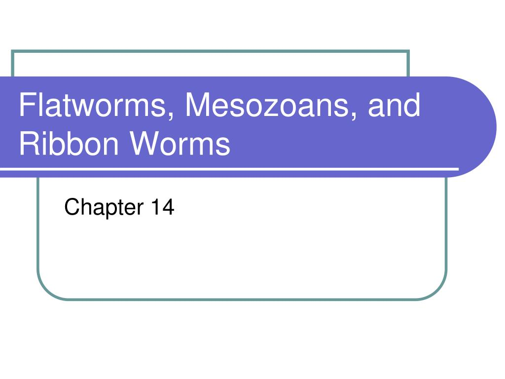 flatworms mesozoans and ribbon worms l.