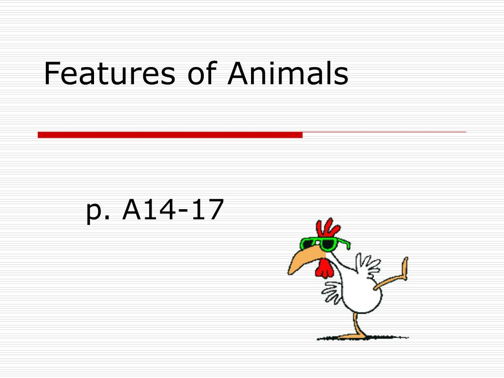 features of animals l.