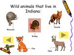 wild animals that live in indiana27