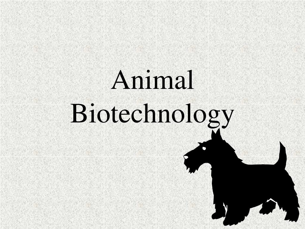 animal biotechnology l.