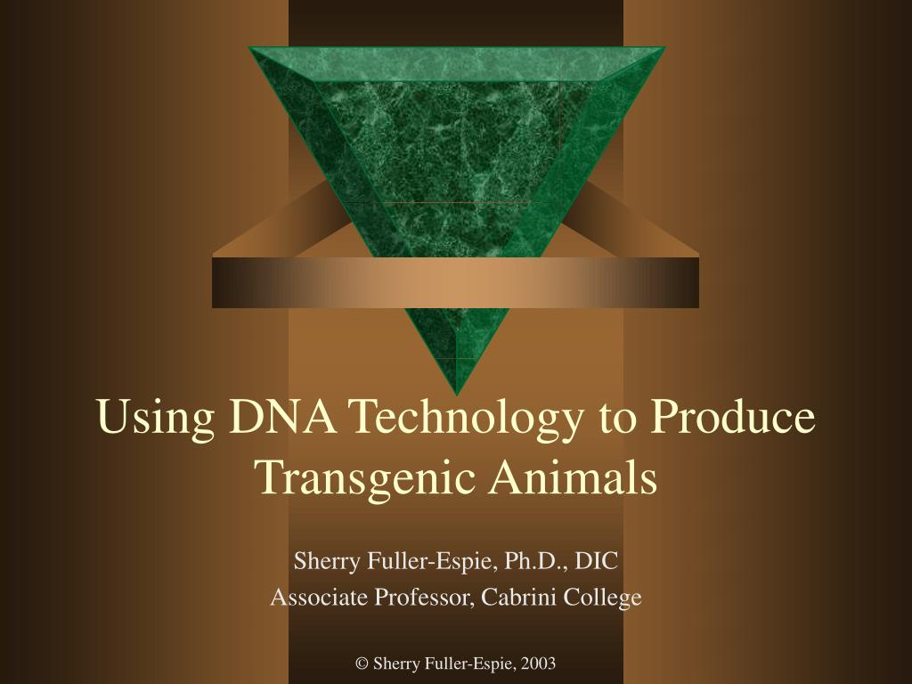 using dna technology to produce transgenic animals l.