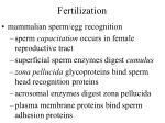 fertilization24
