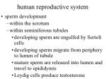 human reproductive system42