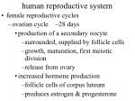human reproductive system50