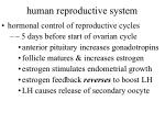 human reproductive system54