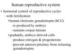 human reproductive system58