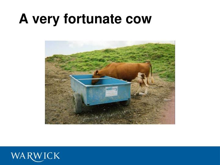 A very fortunate cow