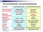 the light microscope v the electron microscope