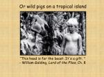 or wild pigs on a tropical island