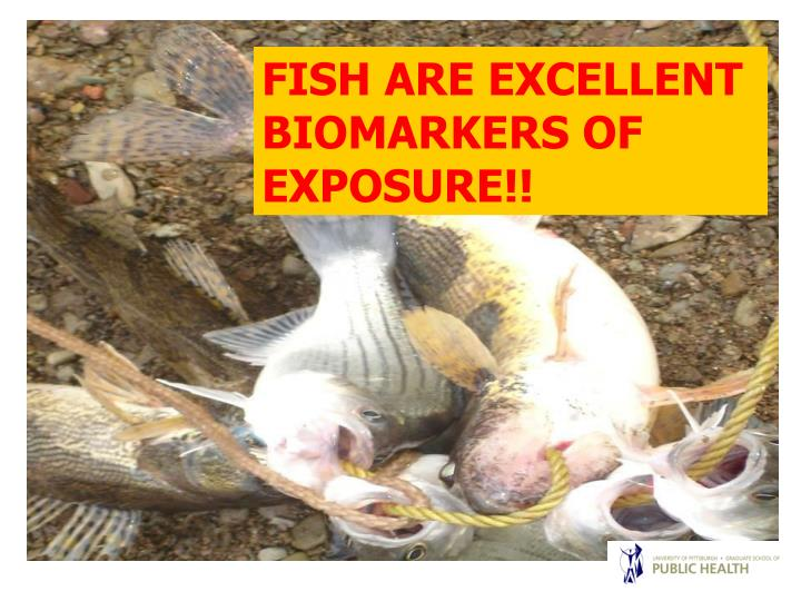 FISH ARE EXCELLENT             BIOMARKERS OF EXPOSURE!!