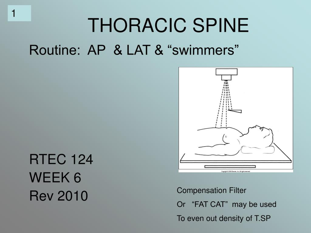 thoracic spine l.