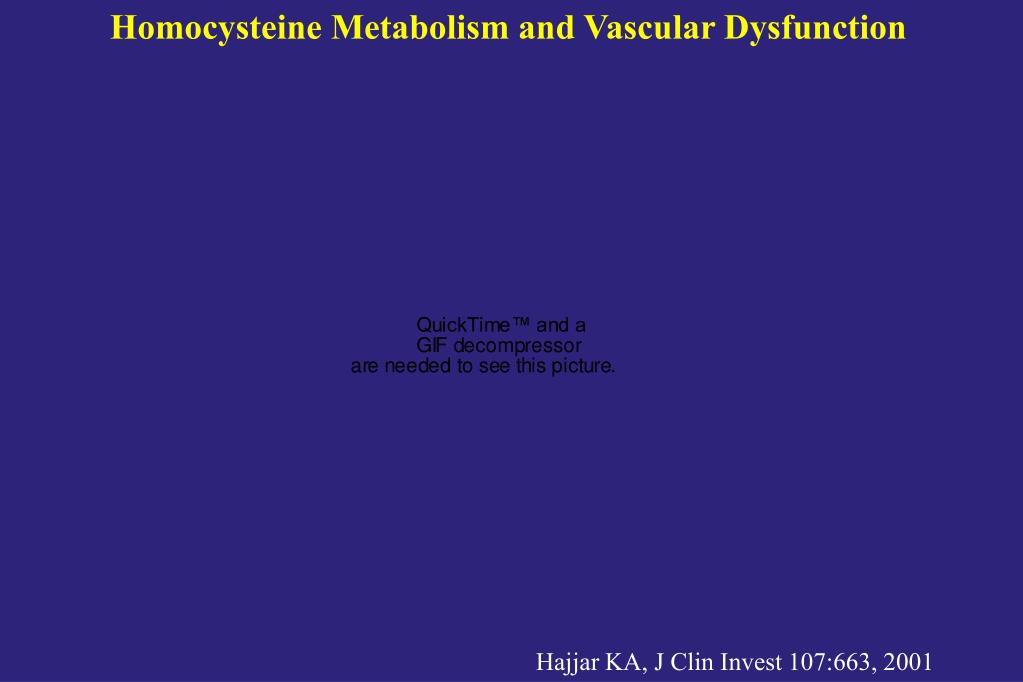 Homocysteine Metabolism and Vascular Dysfunction
