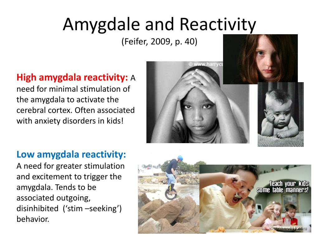 Amygdale and Reactivity