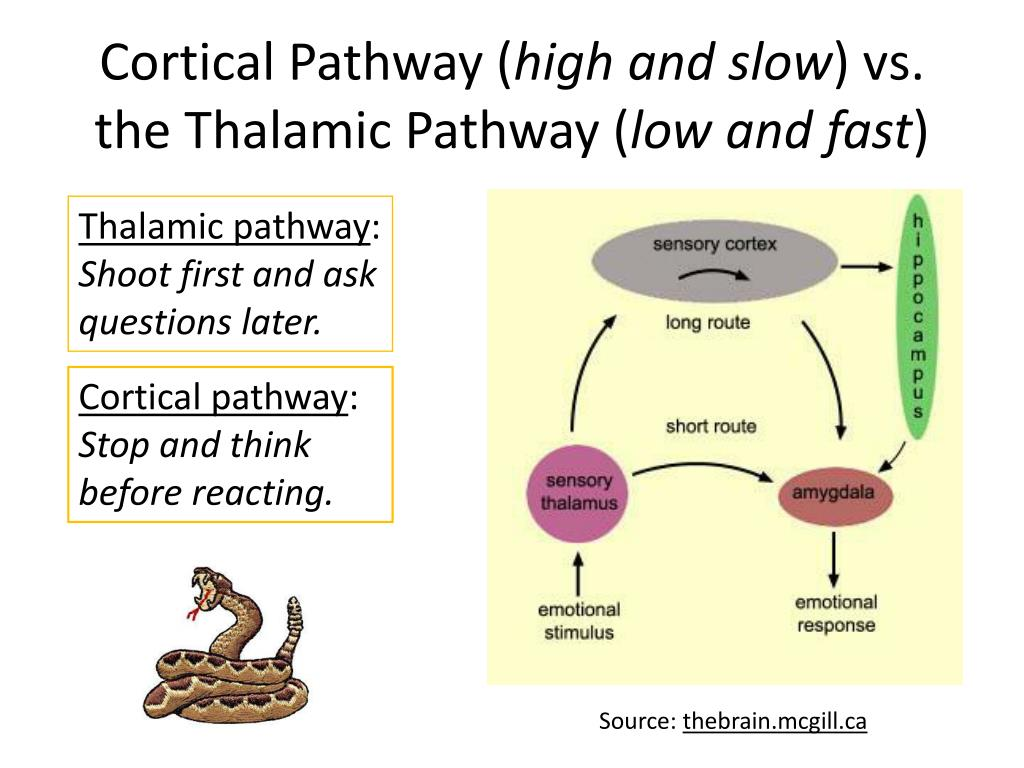 Cortical Pathway (