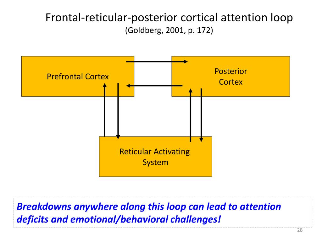 Frontal-reticular-posterior cortical attention loop