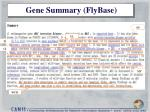 gene summary flybase