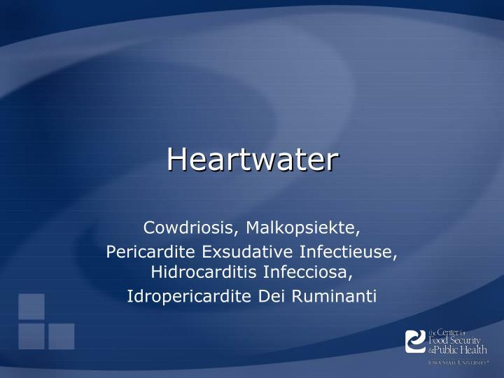 heartwater n.