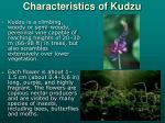 characteristics of kudzu