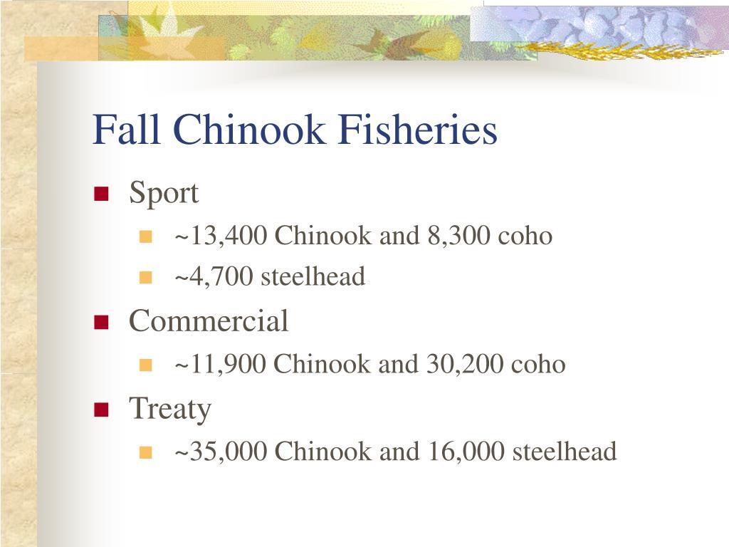 Fall Chinook Fisheries