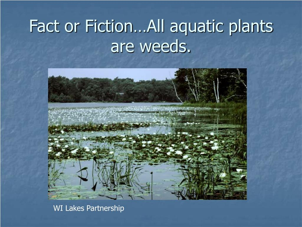 Fact or Fiction…All aquatic plants are weeds.