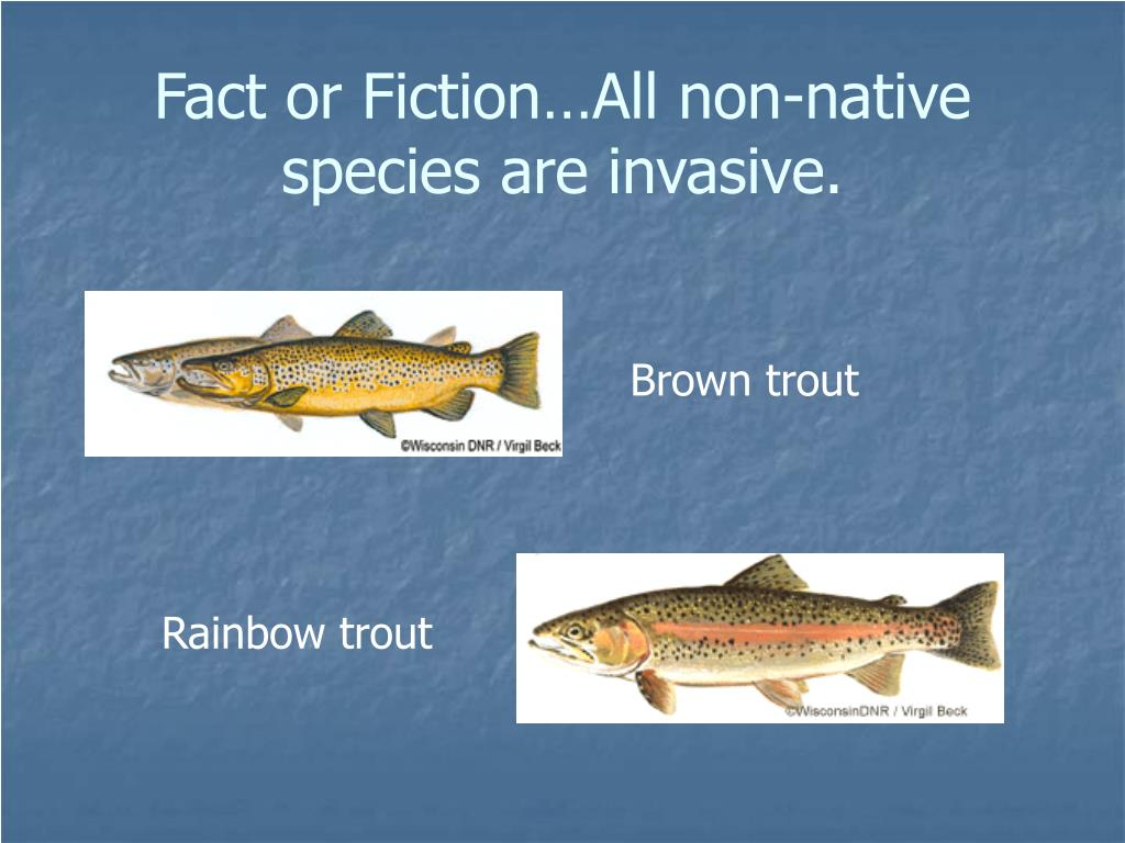 Fact or Fiction…All non-native species are invasive.