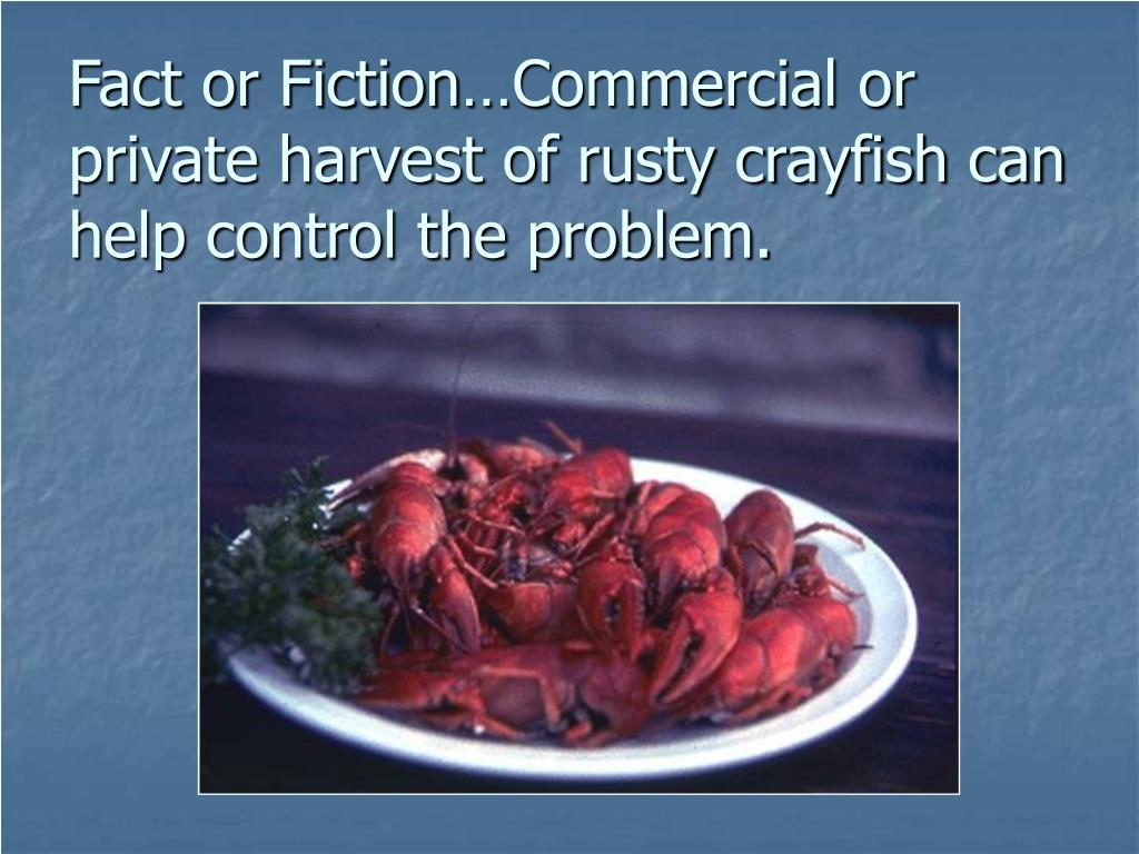 Fact or Fiction…Commercial or private harvest of rusty crayfish can help control the problem.