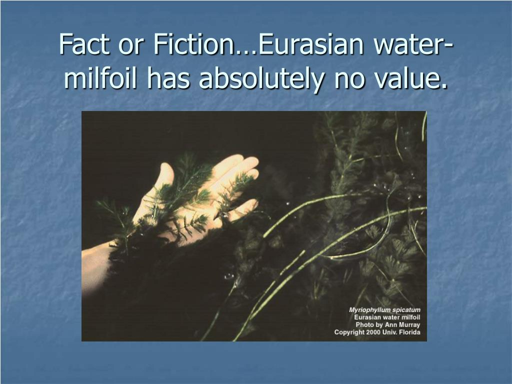 Fact or Fiction…Eurasian water-milfoil has absolutely no value.