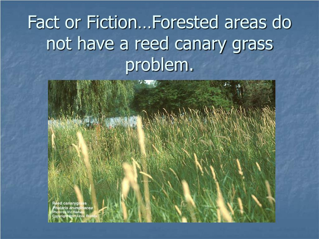Fact or Fiction…Forested areas do not have a reed canary grass problem.