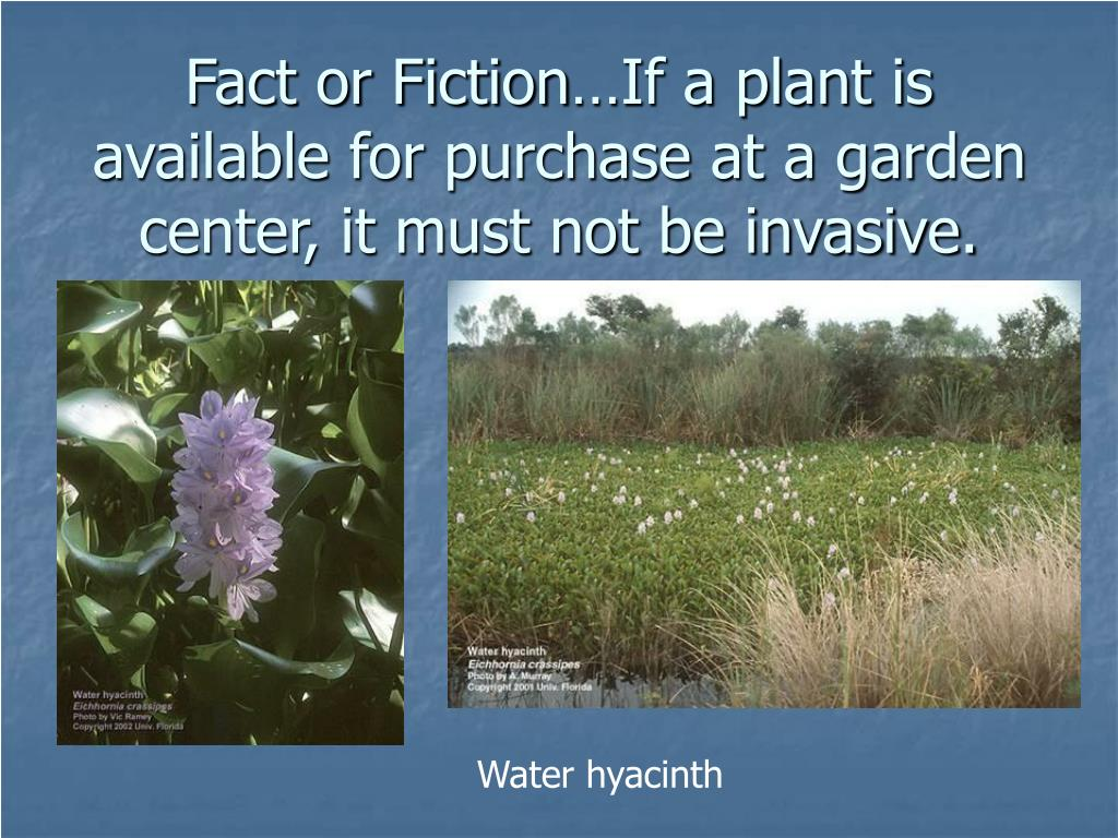 Fact or Fiction…If a plant is available for purchase at a garden center, it must not be invasive.