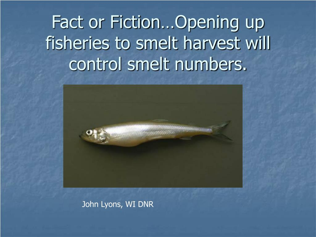 Fact or Fiction…Opening up fisheries to smelt harvest will control smelt numbers.
