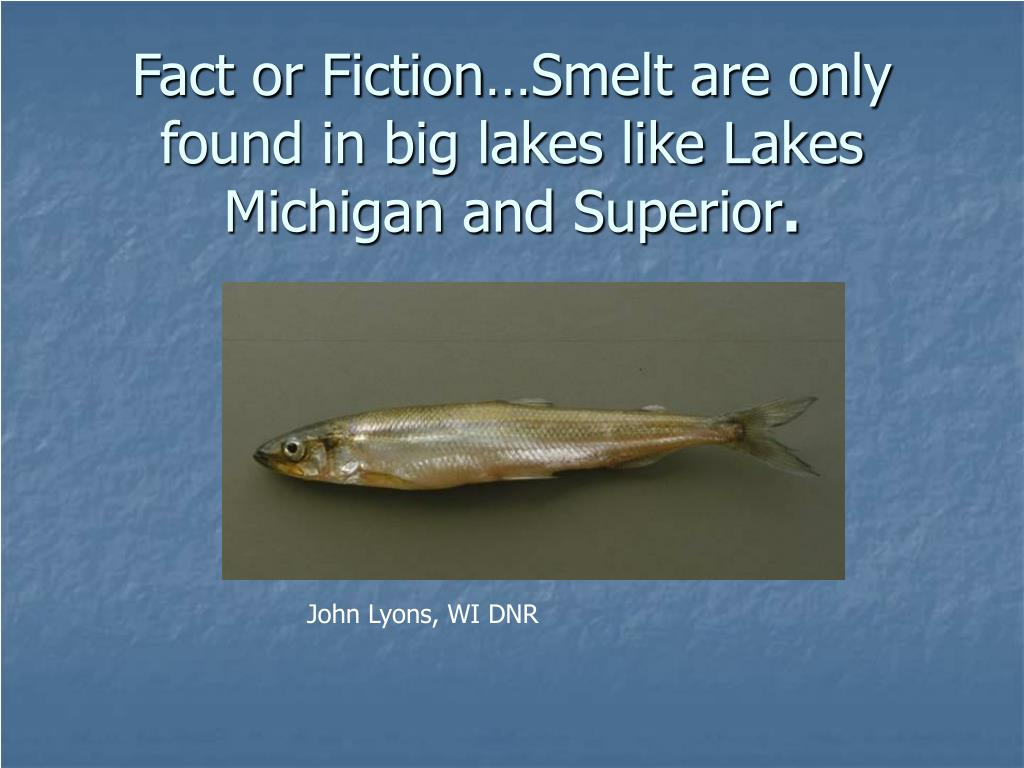 Fact or Fiction…Smelt are only found in big lakes like Lakes Michigan and Superior